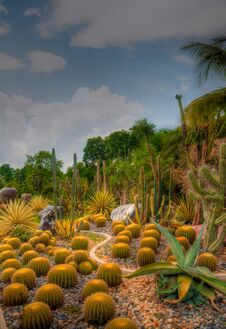 Free Garden Royalty Free Stock Photo - 31078045
