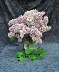 Free Still Life Of Lilac Stock Image - 31085041