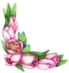 Hand-drawn Tulip Corner Royalty Free Stock Photos