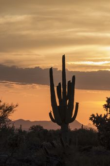 Free Desert Sunset Royalty Free Stock Photography - 31086987