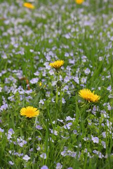 Free Field Of Spring Flowers Royalty Free Stock Images - 31089659