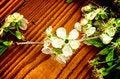 Free Cherry-Blossom Stock Photo - 31094750