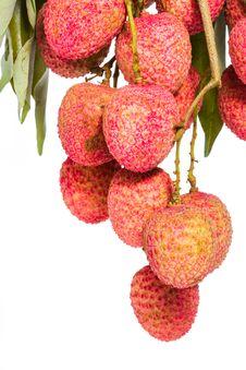 Free Isolated Fresh Lychees Fruit Stock Photos - 31091803