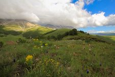 Free Spring Landscape With Flowers Royalty Free Stock Photos - 31093938