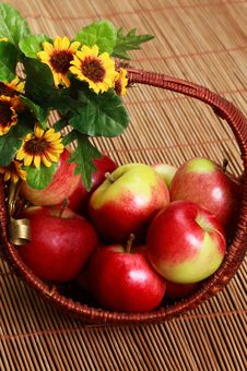 Free Apples Stock Photography - 3110522