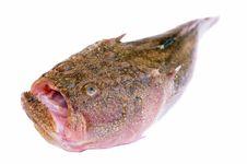 Free Fish Stock Image - 3110851