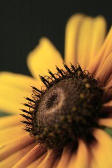 Free Flower Stock Photo - 3111050