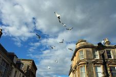 Free Seagulls Flight Over City. Royalty Free Stock Photo - 3111225