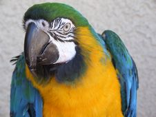 Free Paco A Military Macaw Stock Photography - 3112252
