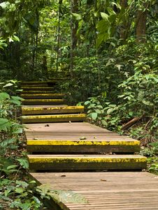 Free Jungle Boardwalk Royalty Free Stock Image - 3114206