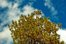 Free Tree In The Sky Royalty Free Stock Images - 3114929