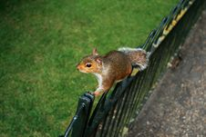 Free A Squirrel On A Fence Stock Photos - 3115813