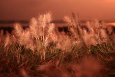 Free Sunrise Grass Stock Photography - 31104092