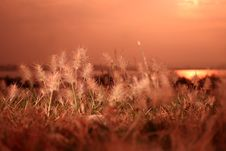 Free Sunrise Grass Stock Photo - 31104190