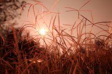 Free Sunrise Grass Stock Image - 31104941