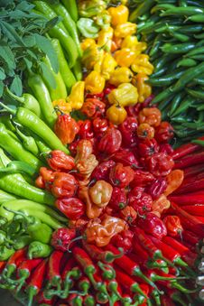 Free Chili Peppers Royalty Free Stock Image - 31106096