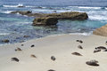 Free Seals On The Beach Stock Images - 31111364