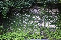 Free Plant Wall Royalty Free Stock Photography - 31115067