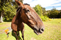 Free Horse In The Nature Royalty Free Stock Photo - 31116275