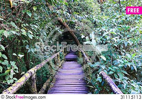 Free Wood Bridge Stock Photos - 31115113