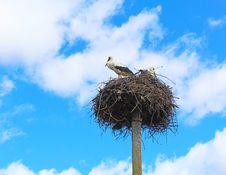 Free Storks Flew Stock Photos - 31110333