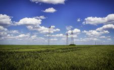 Free Grain Field Stock Images - 31110504