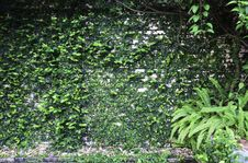 Free Plant Wall Stock Photography - 31115052