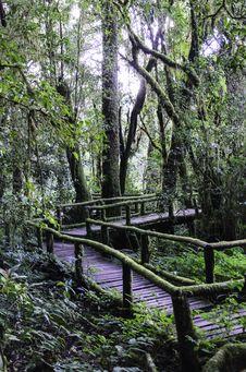 Free Wood Bridge Royalty Free Stock Photos - 31115098