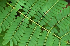 Bracken Background Royalty Free Stock Photos