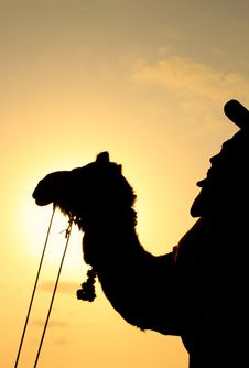 Free Silhouette Of A Camel During Sunset Royalty Free Stock Photos - 31121178