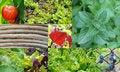Free Garden Collage Stock Photos - 31145553