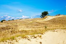 Free At The Curonian Spit Royalty Free Stock Photography - 31141117
