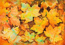 Free Maple Leaf Painting Stock Photography - 31143082