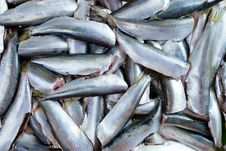 Free Fresh Crude Anchovies Royalty Free Stock Images - 31146059