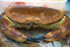 Free Row Crab Royalty Free Stock Photography - 31149967