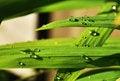 Free Green Grass Stock Image - 31150041