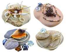 Free Shells On Stones Isolated Royalty Free Stock Images - 31158339