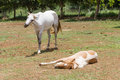Free Horse Sleeping Stock Photos - 31164333