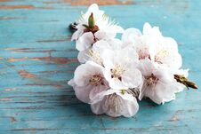 Free Blossoming Tree Brunch With White Flowers Royalty Free Stock Images - 31161699