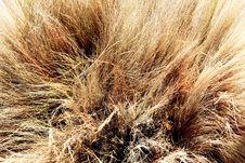 Free Brush Broom Stock Photo - 31161900
