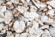 Free Cassava Root Slice Stock Photography - 31163792