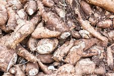 Free Cassava Root Stock Images - 31163924