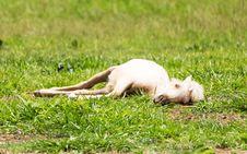 Free Horse Sleeping Royalty Free Stock Photo - 31164285