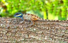 Bright Color Lizard &x28;pangolin&x29; On A Tree