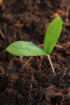 Free Young Plant Stock Photography - 31170932