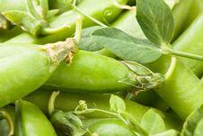 Free Peas Pod Leaves Stock Image - 31171351