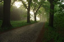 Free Forest Road In The Morning. Stock Images - 31174414