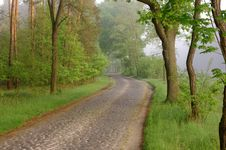 Free Forest Road In The Morning. Stock Image - 31174511