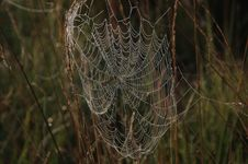 Free Cobweb. Royalty Free Stock Photo - 31175135