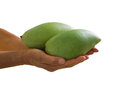 Free Mangoes Royalty Free Stock Photos - 31183148